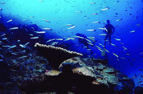 Rodrigues Island diving