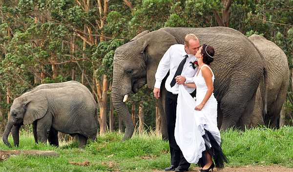 South African safari wedding - best wedding destination