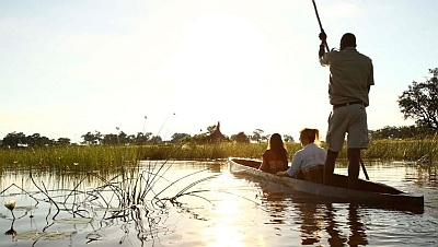 Mekoro in the Okavango Delta