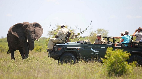 Ngala Tented Camp - Kruger safari