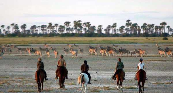 Horse riding with Zebra in Makgadikgadi Pans