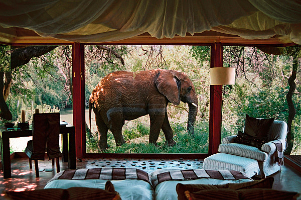 Elephant passing bedroom
