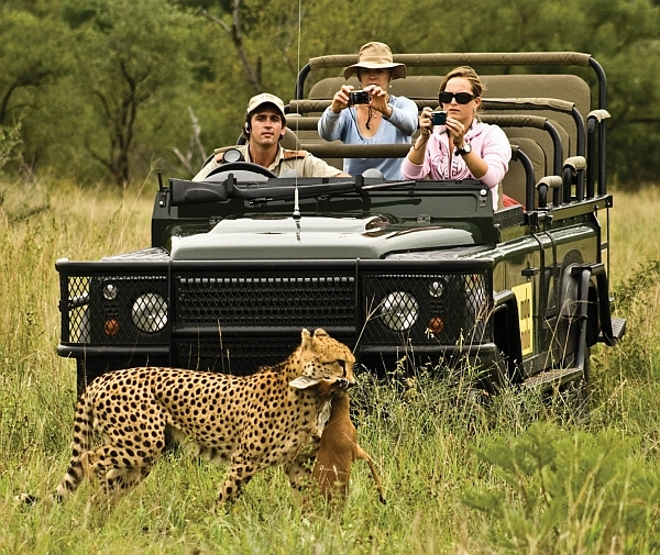 MalaMala offers exceptional game viewing - leopard with kill