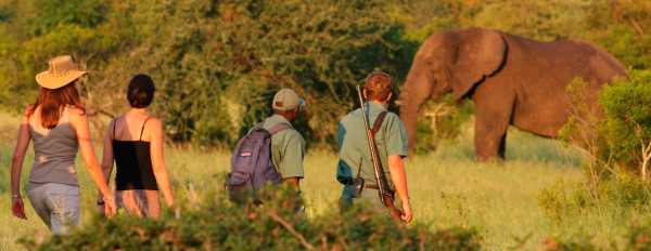 Rhino Walking Safari in the Kruger National Park