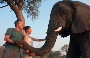 Elephant experience at Stanleys Camp, Okavango_Delta