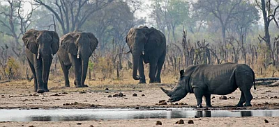 The best of Zimbabwe and Zambia Safari